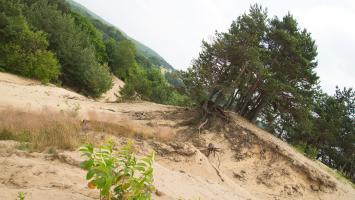 Złoty Potok i Pustynia Siedlecka - zdjęcie