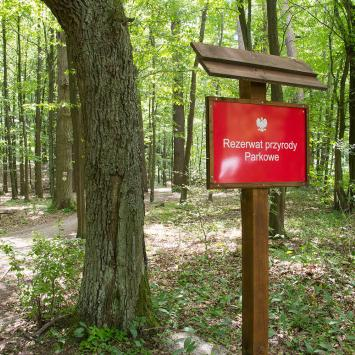 Rezerwat Parkowe w Złotym Potoku - zdjęcie