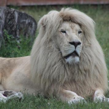 Zoo Safari - zdjęcie