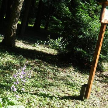 Ogród Dendrologiczny w Zespole  Przyrodniczo-Krajobrazowy w Lipnie