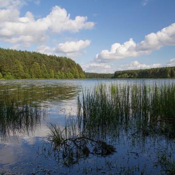 Jezioro Długie w Węsiorach