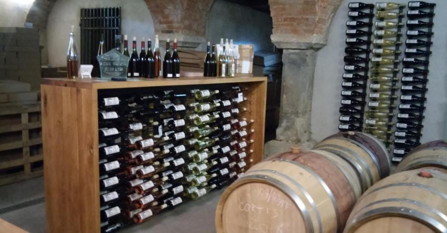Winnice w Paczkowie - zdjęcie