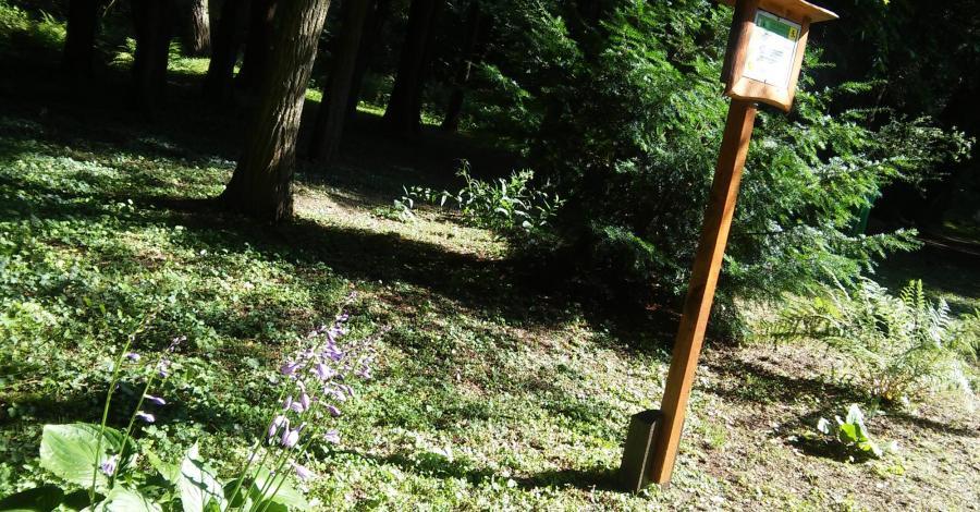 Ogród Dendrologiczny w Zespole Przyrodniczo-Krajobrazowy w Lipnie - zdjęcie