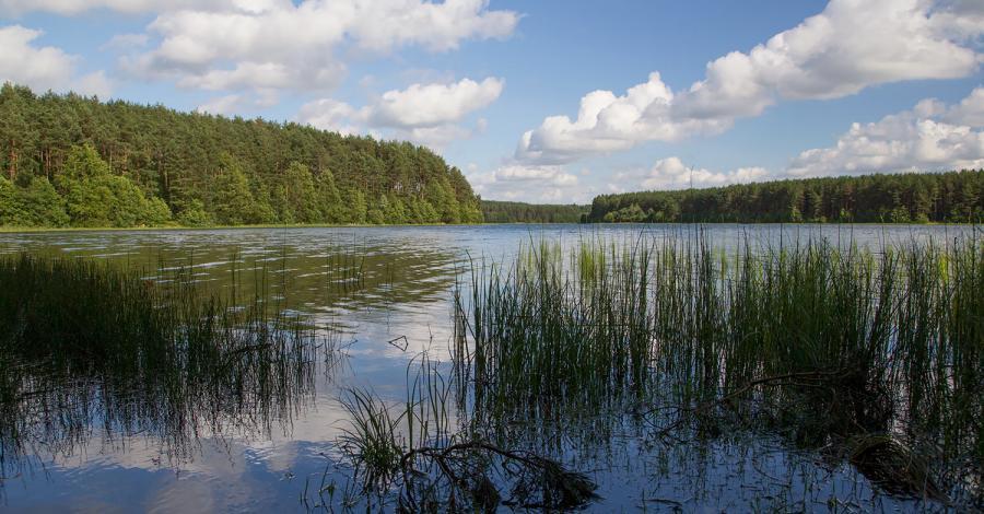 Jezioro Długie w Węsiorach - zdjęcie