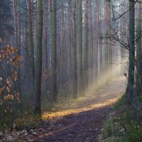 Rozświetlony las