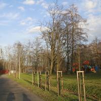 ścieżka spacerowa w Parku nad Zalewem Dolnym
