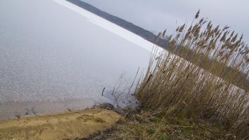 Prawie samotny spacer przez las nad Jezioro Nakło Chechło - zdjęcie
