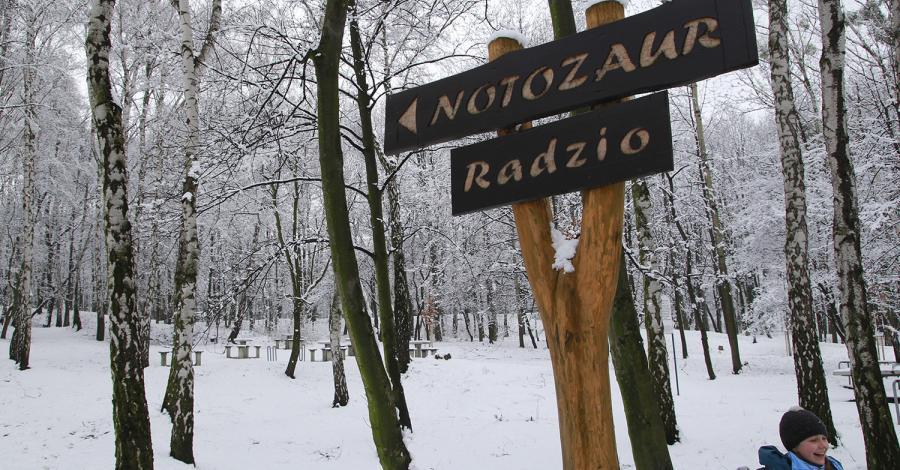 Księża Góra w Radzionkowie zimowo, Anna Piernikarczyk