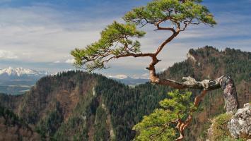 Sokolica w Pieninach z Krościenka - zdjęcie