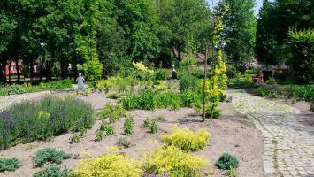 Miniarboretum w Bytomiu - zdjęcie