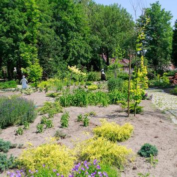 Miniarboretum w Bytomiu