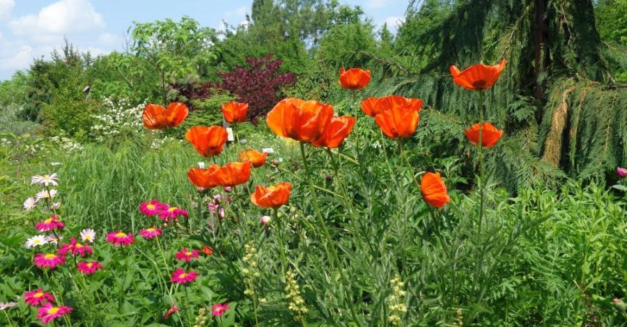 Gołubieński Ogród Botaniczny - zdjęcie
