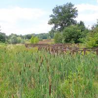Śląski Ogród Botaniczny w Mikołowie - Ogród Czerwony