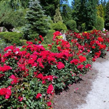Ogrody Hortulus w Dobrzycy
