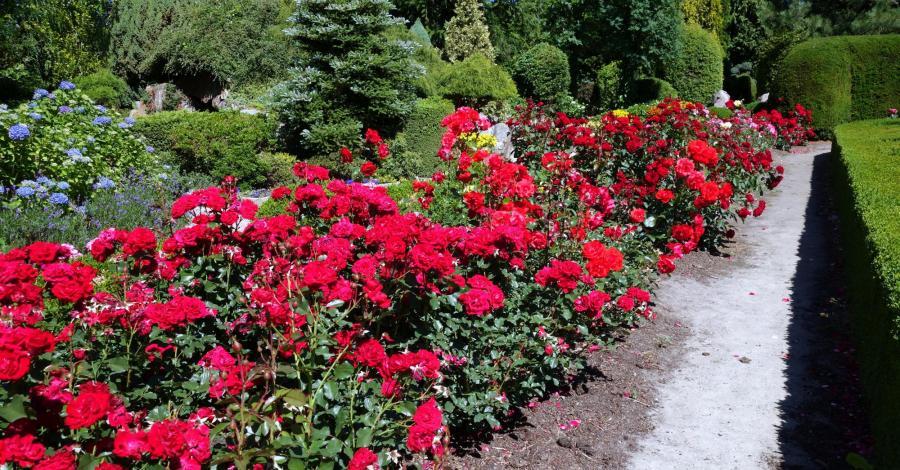 Ogrody Hortulus w Dobrzycy, Anja