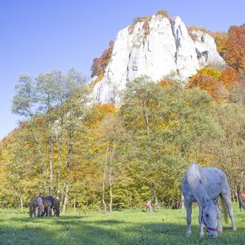Dolina Będkowska - zdjęcie