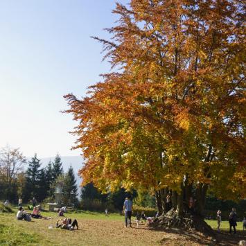 Jesień na Kudłaczach w Beskidzie Wyspowym