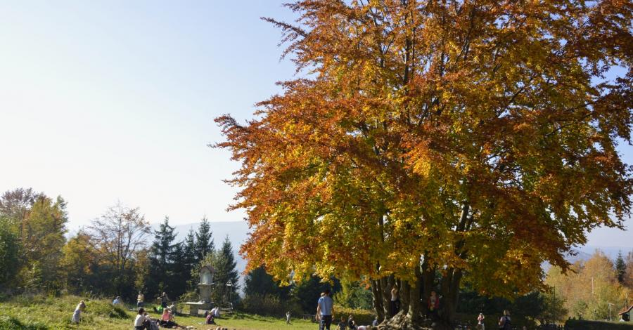 Jesień na Kudłaczach w Beskidzie Wyspowym - zdjęcie