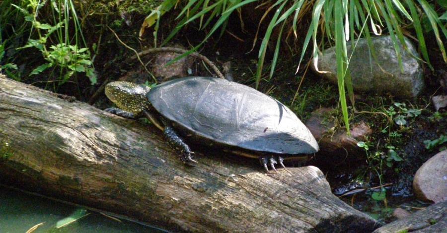 Powitanie z żółwiami i Poleskim Parkiem Narodowym + ścieżka Spławy, Joanna