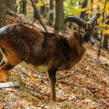 Ustroń : Park Leśnych Niespodzianek i okolica