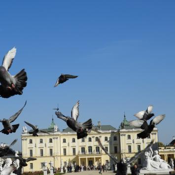 Białystok z gołębiami i początkiem jesieni