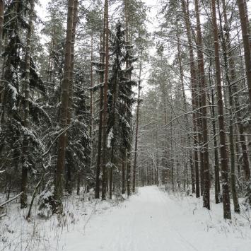 Puszcza Knyszyńska i Supraśl w zimowej szacie
