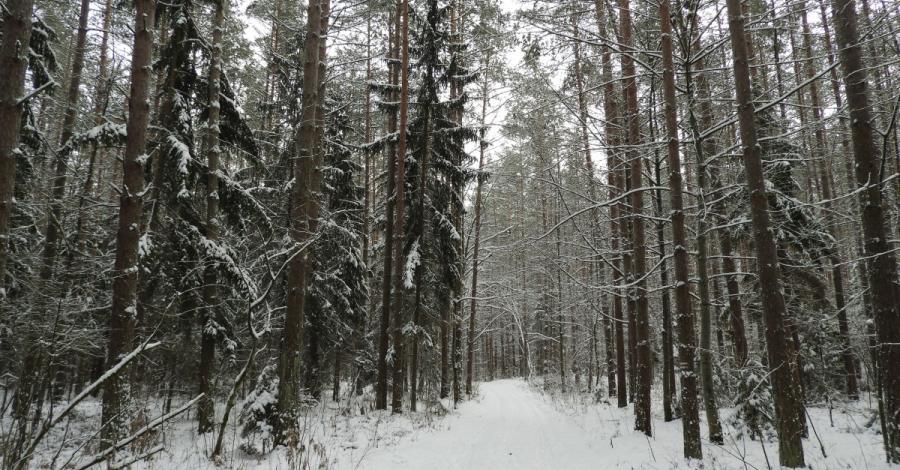 Puszcza Knyszyńska i Supraśl w zimowej szacie, Joanna