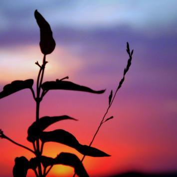 Muśnięte słońcem - Olsztyn (k. Częstochowy)