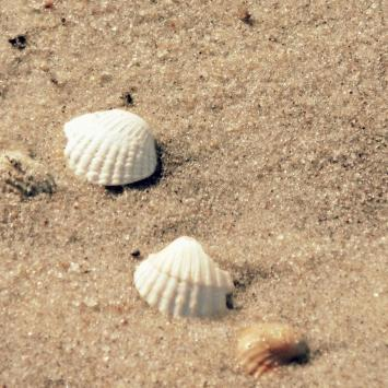 Samotnie na wolińskiej wyspie – V dzień – Międzywodzie