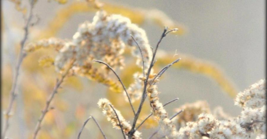 Przechyla się ku jesieni ziemia .... (Biakło, Sokole Góry) - zdjęcie