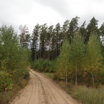 Puszcza Knyszyńska - okolice Ponikły