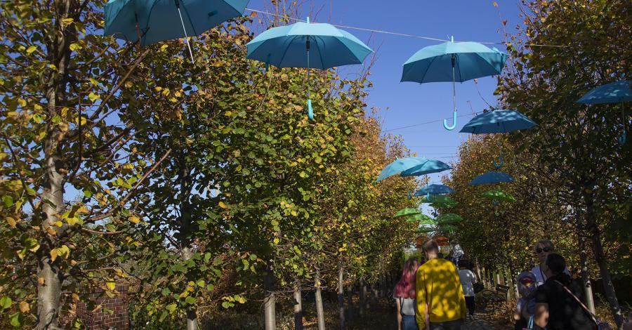 Goczałkowice - Ogrody Kapias - zdjęcie