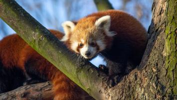 Śląski Ogród Zoologiczny czyli Zoo w Chorzowie - zdjęcie