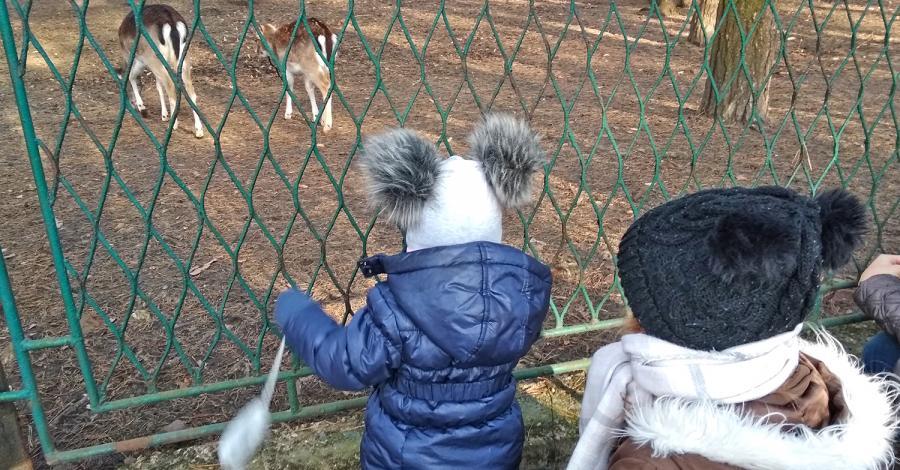 Radocha dla dzieci w sosnowieckim Parku Kuronia - zdjęcie