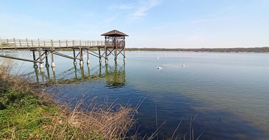 W Rezerwacie Łężczok i w Arboretum Bramy Morawskiej czyli przyrodniczy Racibórz - zdjęcie