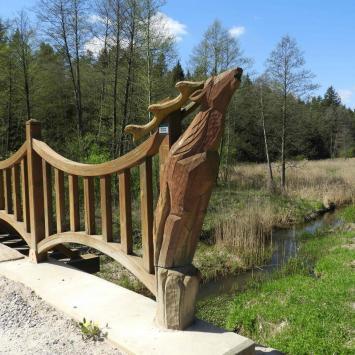Jeleni Most i wieża widokowa Pierekał w Puszczy Knyszyńskiej