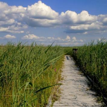 W dzikiej zieleni Polesia - III DZIEŃ – Trzy ścieżki szczęścia: Perehod/ Obóz powstańczy/ Czahary – - zdjęcie