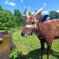 Park Przygód i Atrakcji w Wilkowicach