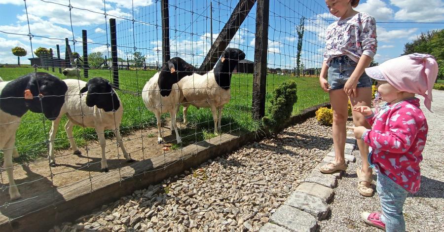 Wspaniale z dziećmi w Parku Przygód i Atrakcji w Wilkowicach - zdjęcie