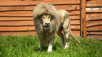Rodzinna uciecha w Zoo Safari Borysew