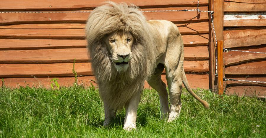 Rodzinna uciecha w Zoo Safari Borysew - zdjęcie