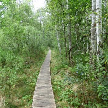 Poleski Park Narodowy - zdjęcie