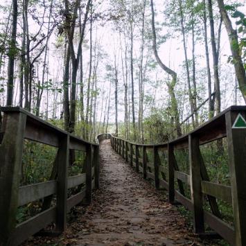 """Poleski Park Narodowy - ścieżka """"Dąb Dominik"""" - zdjęcie"""