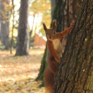 Polowanie na wiewiórki w Białymstoku - zdjęcie