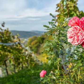 Eno i Eko czyli podtarnowskie winnice i lokalne produkty w cieniu pięknych gór