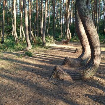 Retrospekcja V - Krzywy las, Niemcy i Otton z Bambergu - zdjęcie