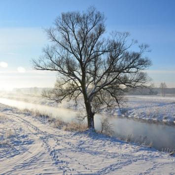 Zimą w pobielonym lesie - zdjęcie