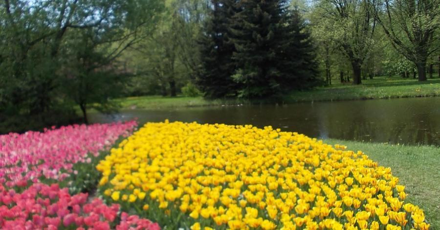 Wiosenna odsłona Ogrodu Botanicznego w Łodzi - zdjęcie