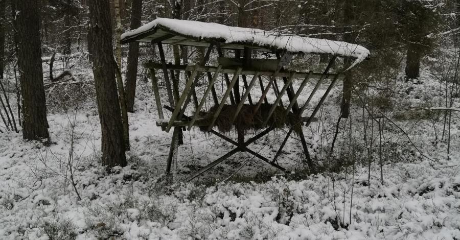 Spacer po lesie w zimowej szacie. - zdjęcie