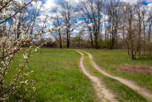 Ścieżka nad starorzecza